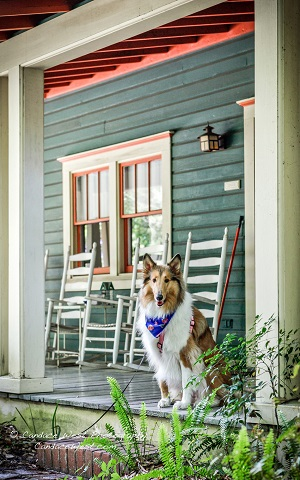 pet friendly, magnolia plantation bed and breakfast inn and cottages, gainesville, florida